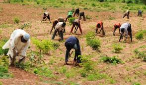 Agriculturalist urges farmers to embrace dry season farming